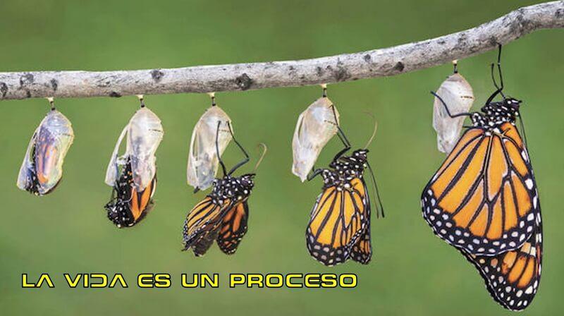16.09.04 LA VIDA ES UN PROCESO